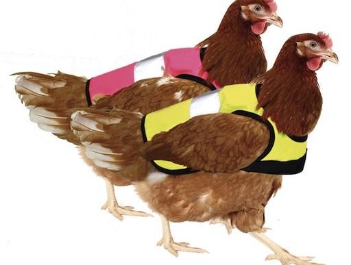 La superviviencia no tiene que ser para el más apto: abrigos para aves