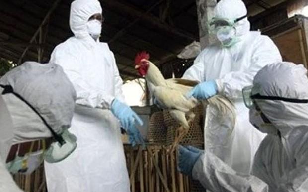 Primera muerte en América del Norte por gripe H5N1
