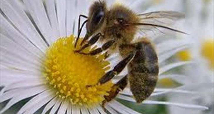 La escasez de abejas amenaza a los cultivos en Europa