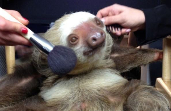 Estas son las marcas de cosméticos y productos de higiene personal que experimentan con animales
