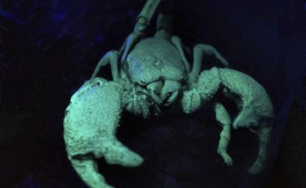 Cómo se desarrolló el veneno de los escorpiones