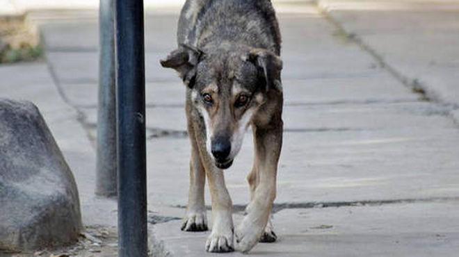 Cinco años después, un perro sigue llorando a su dueño muerto