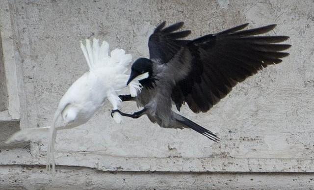 ¿Qué mensaje debemos interpretar cuando atacan a unas palomas de la paz?