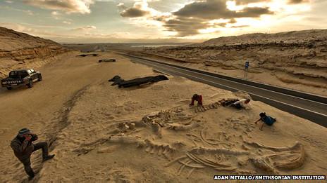 Explican el misterio del cementerio de ballenas en Chile