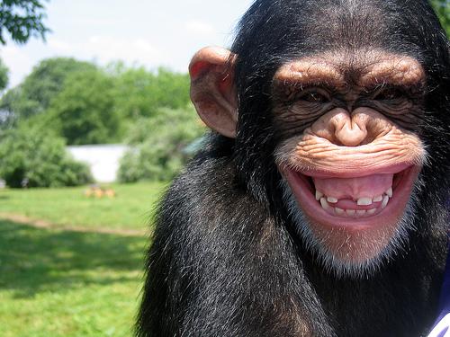 ¿Puede este chimpancé leer tu mente?