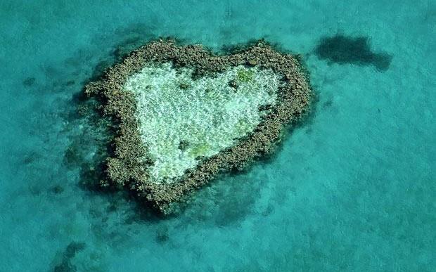 La naturaleza nos desea un feliz día del amor y la amistad