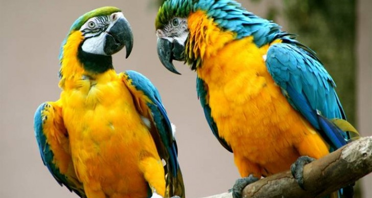 Conmemoran Día Mundial de la Vida Silvestre