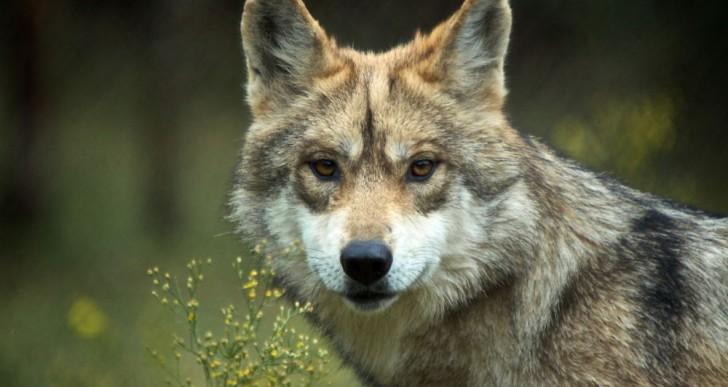 Publican lista de especies prioritarias para la conservación