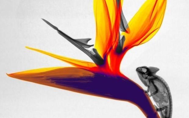 Imágenes de animales en rayos x
