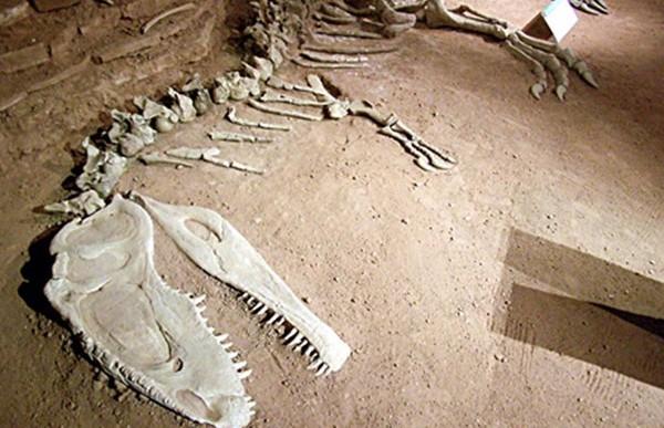 Descubren nueva especie de dinosaurio depredador