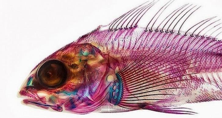 Los peces transparentes de Adam Summers