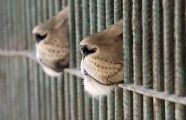 Cierran uno de los peores zoológicos del mundo