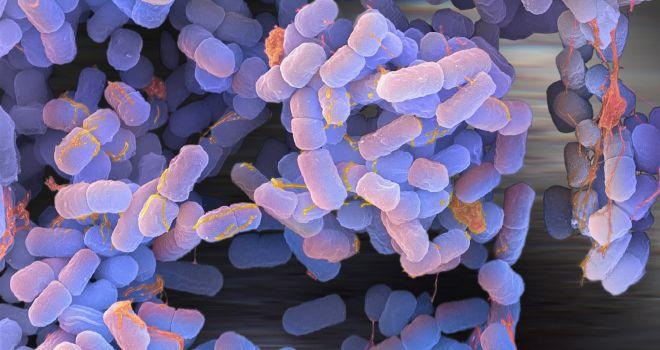 La bacteria E Coli podría solucionar problemas de combustible