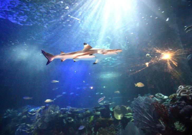 Inaugurarán un nuevo acuario en la Ciudad de México