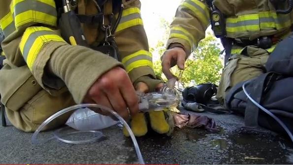 Este bombero hará que recuperes tu fe en la humanidad
