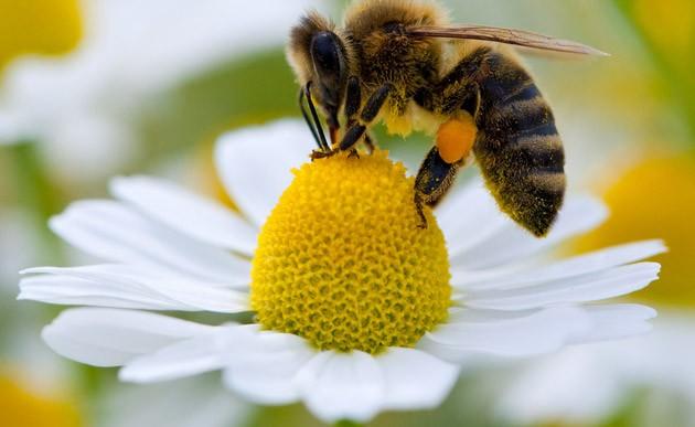 Crean una nueva pesticida que no afecta a las abejas