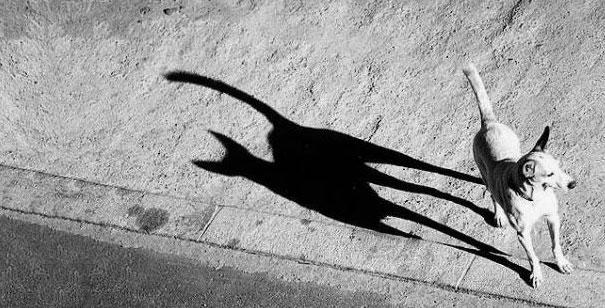 Fotos de sombras que cuentan una historia diferente