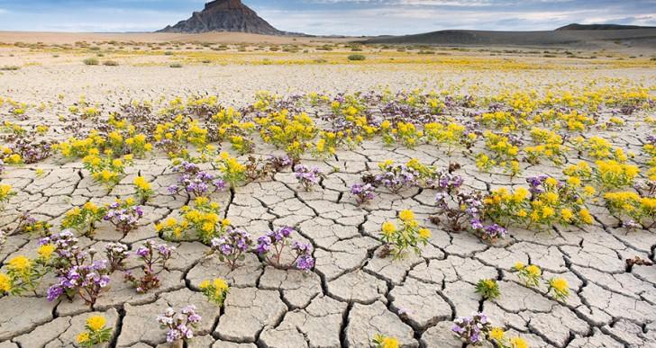 En el desierto también pueden florecer los colores