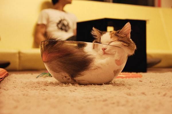 Los gatos dominan el arte de dormir y las imágenes lo demuestran