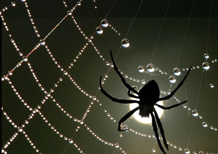 Las arañas afinan sus telarañas como guitarras
