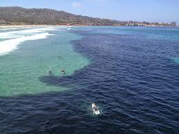 Cardumen de anchoas más grande jamas visto
