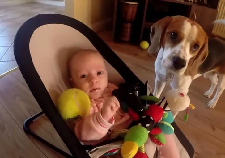 Así de adorable es la disculpa de este perro por robar el juguete de una bebé