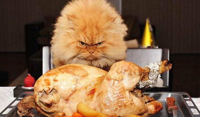Con ustedes: Garfi, el nuevo gato sensación en internet