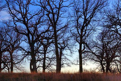 Por qué algunos árboles dejan caer sus hojas en el otoño