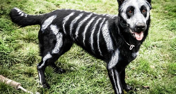 ¿Por qué disfrazar a tus mascotas si puedes pintarlos?