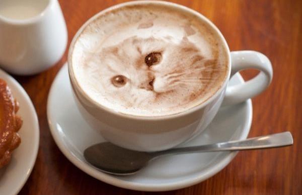 Increíbles retratos realistas de gatos en café