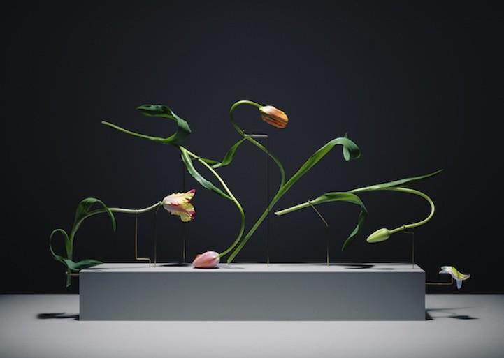 Estas flores de Carl Kleiner expresan todo tipo de emoción