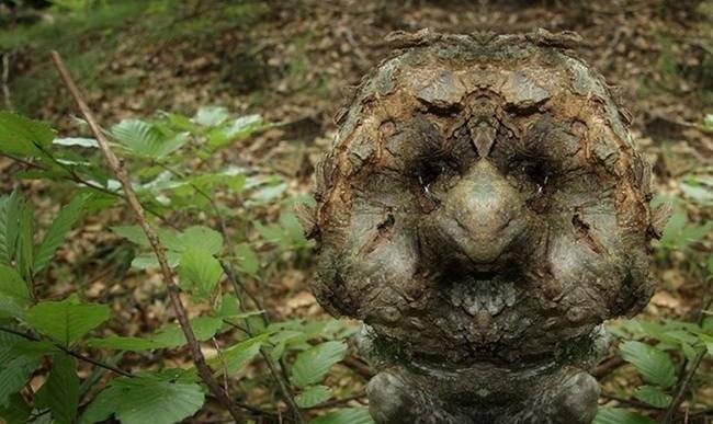 Caras en los árboles: Imágenes en espejo sobrela corteza revelan personajes únicos