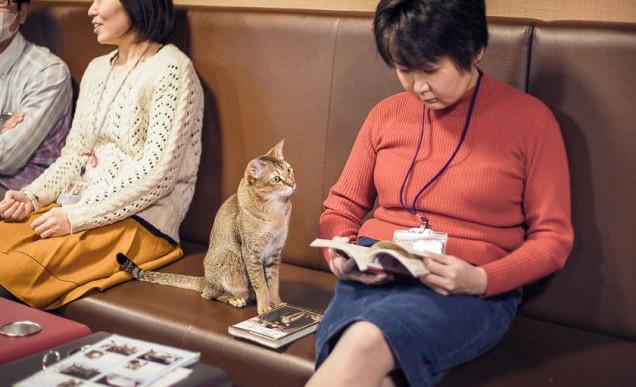 Los extraordinarios gatos callejeros en Japón retratados por Alexandre Bonnefoy