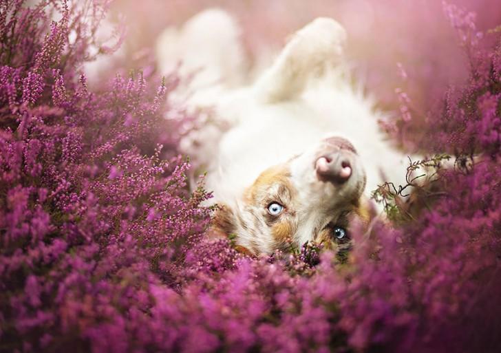 Fotógrafa captura retratos de perros en un mundo fantástico
