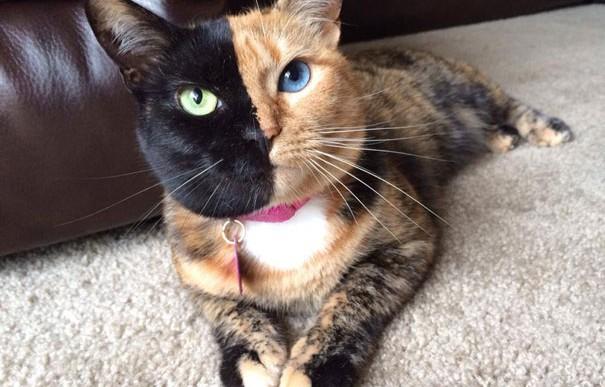 Un parásito en los gatos podría estar vinculado a enfermedades mentales
