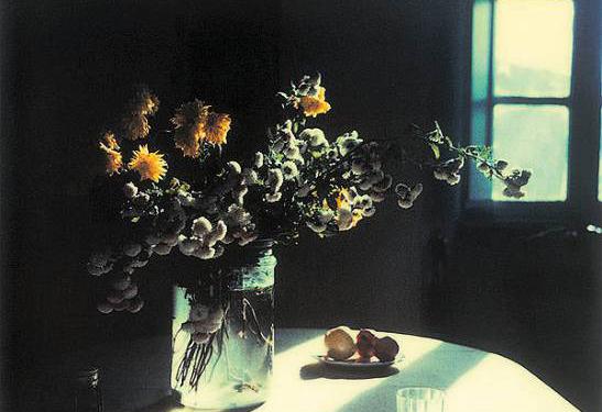 Las polaroids del cineasta Andrei Tarkovsky