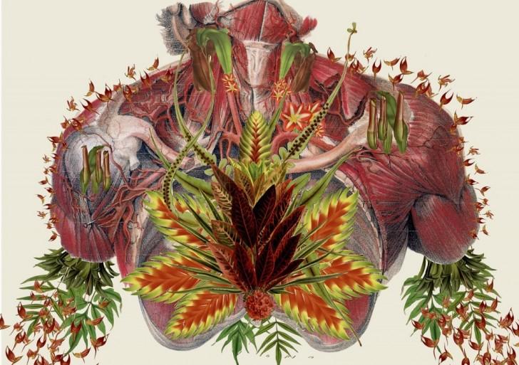 Travis Bedel nos da su colección de bellísimas imágenes anatómicas
