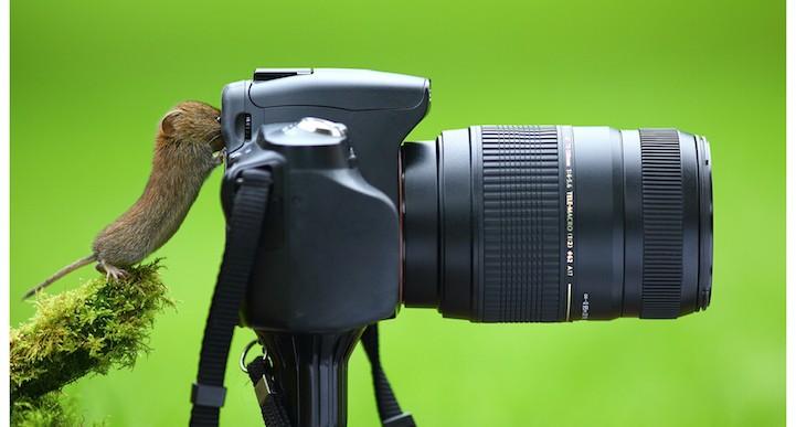 17 animales que quieren ser fotógrafos