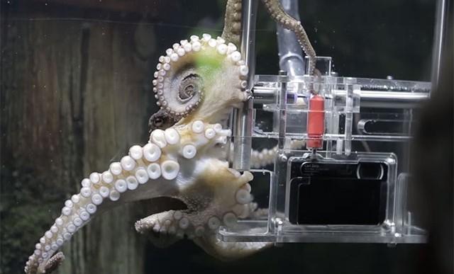 En este acuario, los animales te fotografían a ti