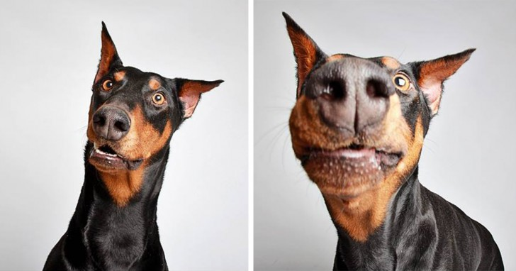 Estos perros muestran su ternura con estas fotos de cabina