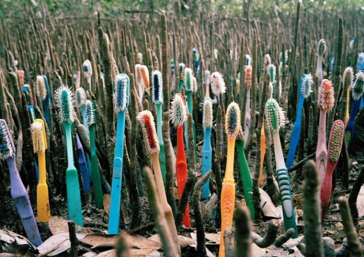 Esto pasa cuando un artista organiza los desechos que se encuentra en la naturaleza