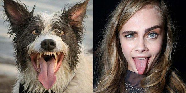 15 fotos de perros mojados comparados con celebridades