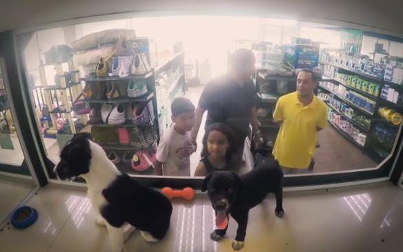 Fueron a comprar un perro y esta fue la hermosa sorpresa que se llevaron