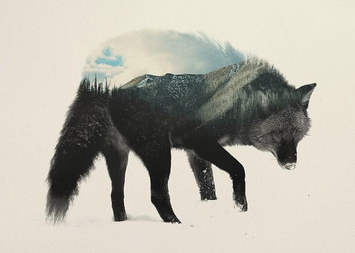Este fotógrafo crea impresionantes obras de arte combinando animales con paisajes
