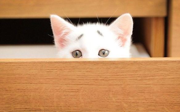 Por culpa de sus cejas este adorable gatito parece estar siempre preocupado