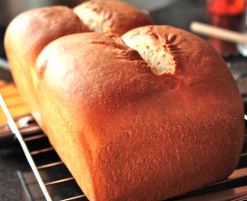 Cómo regresar tu pan a la vida