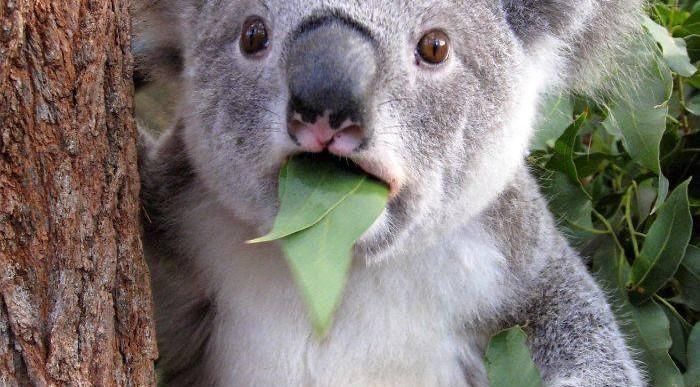 LOL: Estos animales no podrían estar más sorprendidos