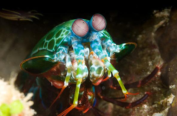 Aquí hay unos animales que seguro nunca has visto en tu vida