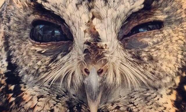 Conoce a Zeus, el búho ciego con el universo dentro de sus ojos