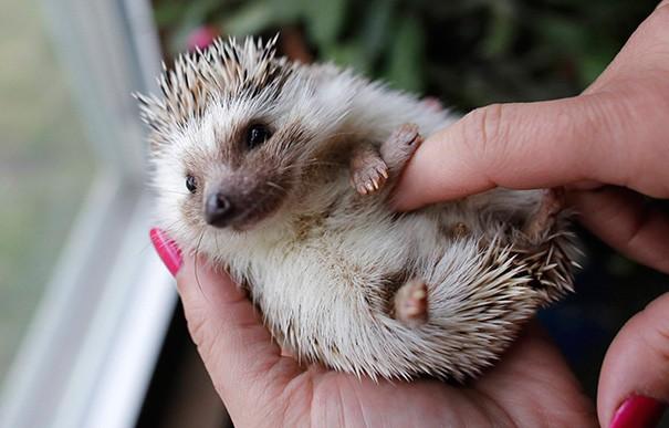 20 encantadores animales que aman las cosquillas